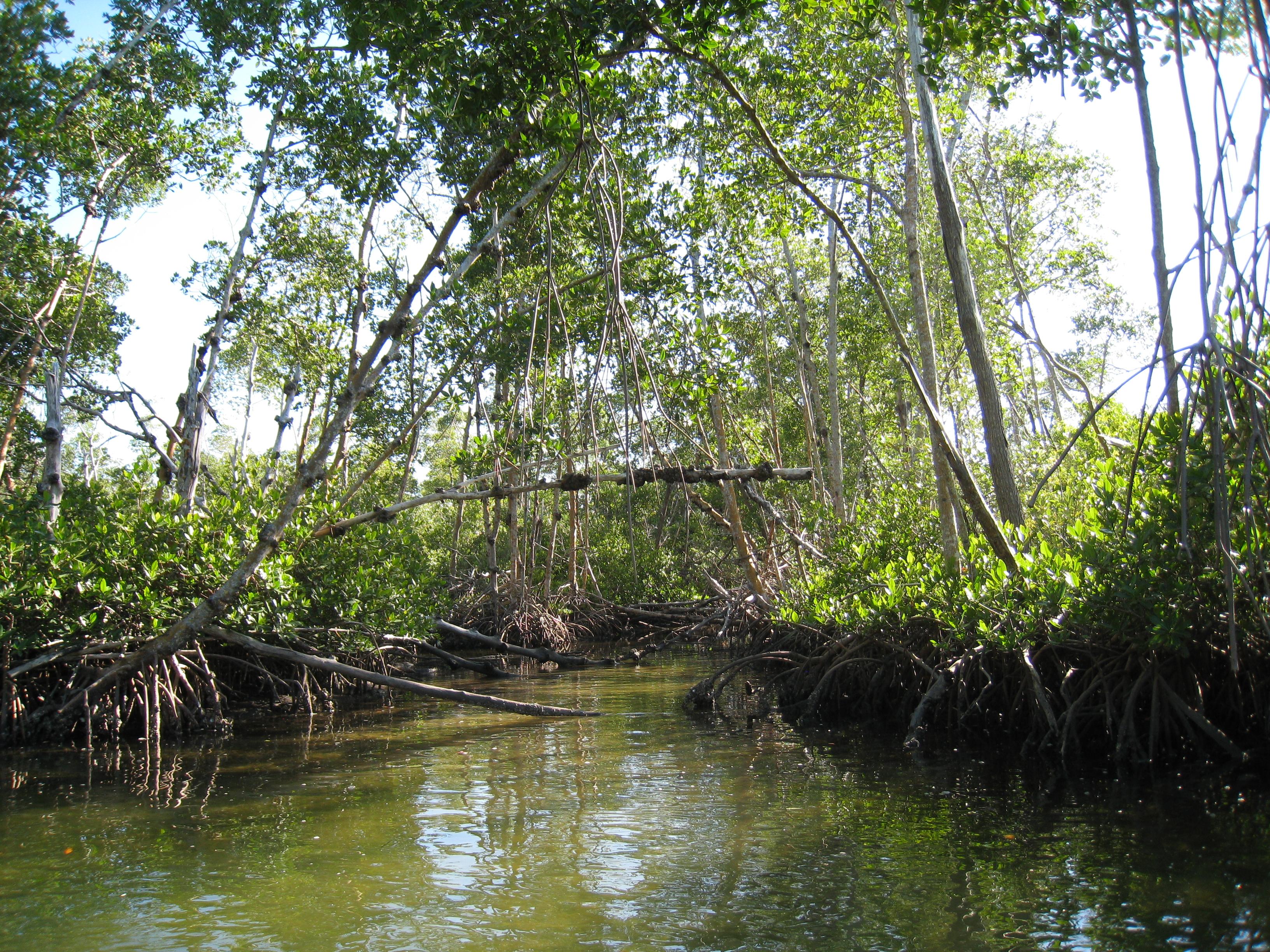 Mangrove (start-slide)