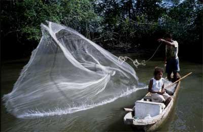 mangrove fishery